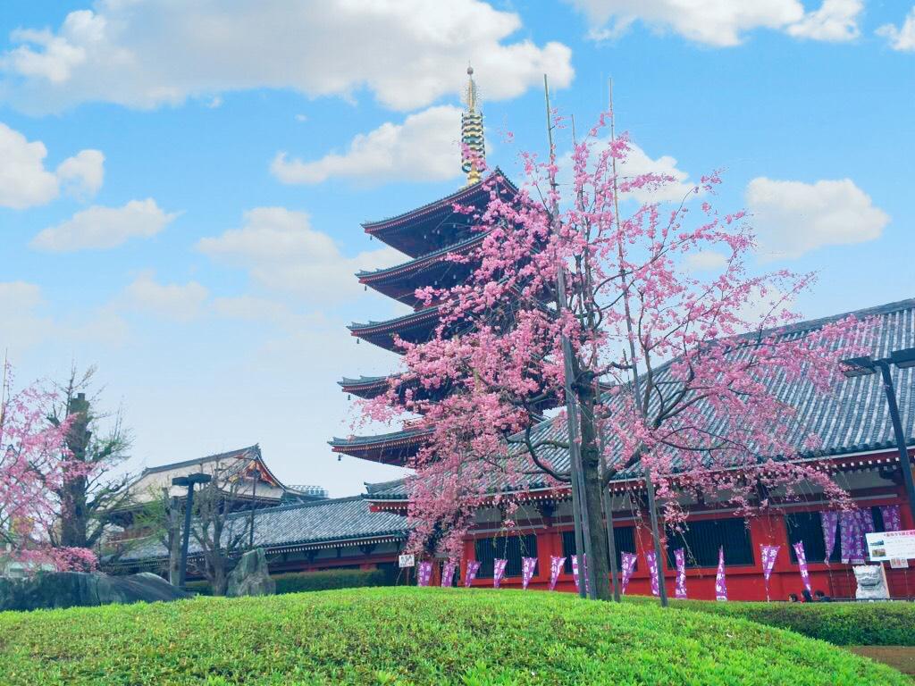 浅草五重塔と桜