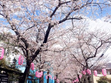 日本最古の武家文庫がある「金沢文庫」へ桜を見に行こう!2021