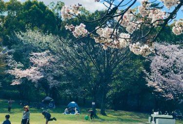 タケノコ掘りもできる自然豊かな公園・牧野ヶ池緑地へ行ってみよう!