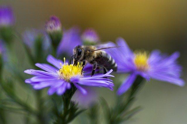 青い花とミツバチ