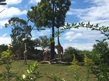 世界旅行した気分になれる「よこはま動物園ズーラシア」、ここがスゴイ!