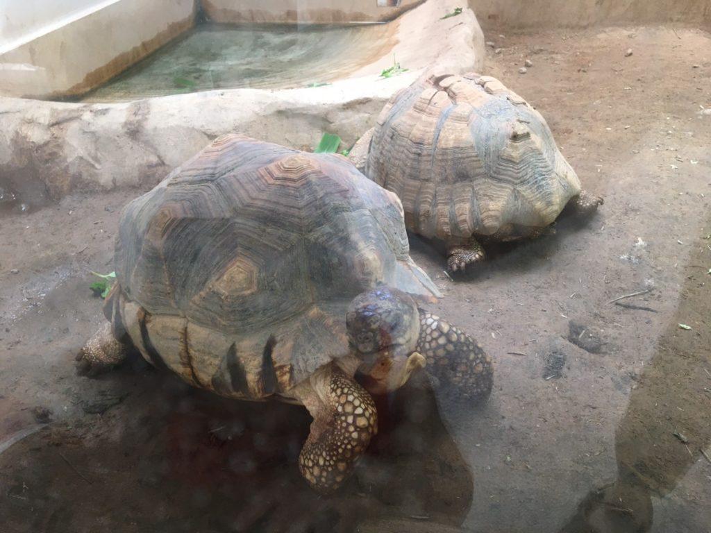 野毛山動物園 爬虫類館