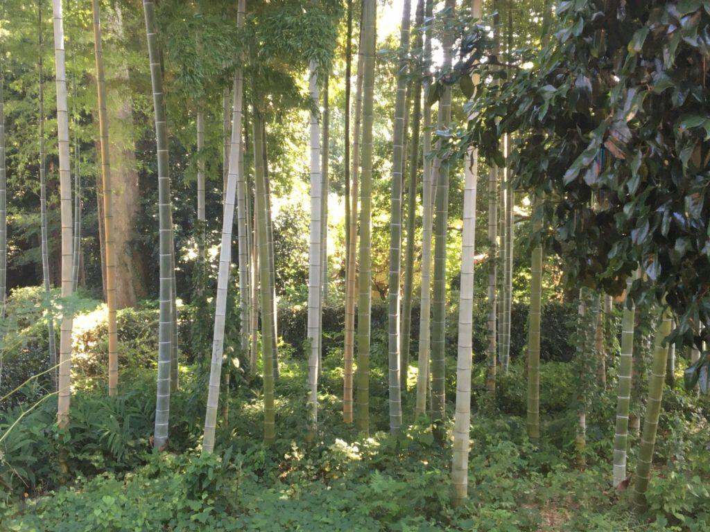 所沢ツリーハウスカフェnicorico竹林