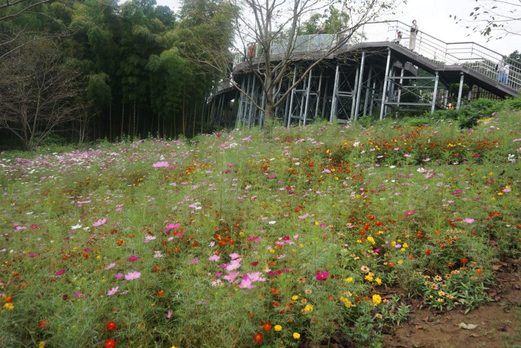 里山ガーデン・ピクニック広場横の花畑
