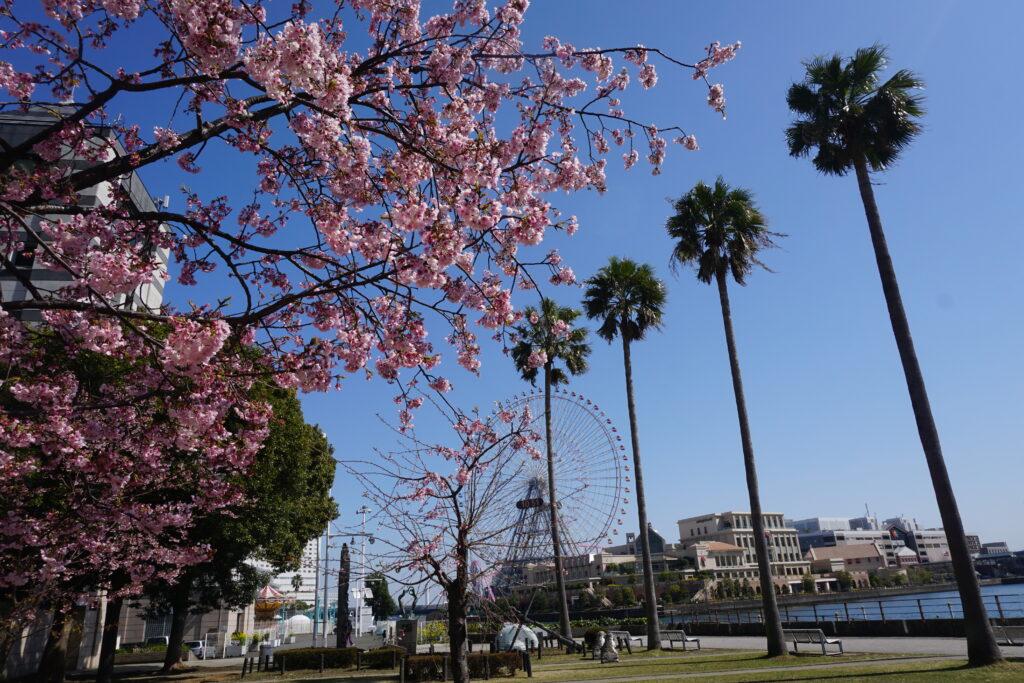 誕生日なら横浜ワールドポーターズに行くのがオトク!
