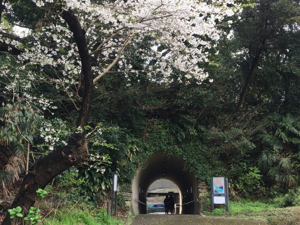 県立金沢文庫トンネル
