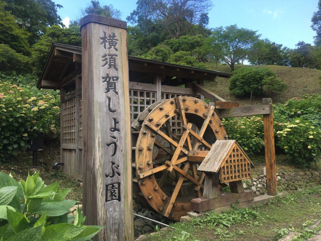 横須賀しょうぶ園 水車