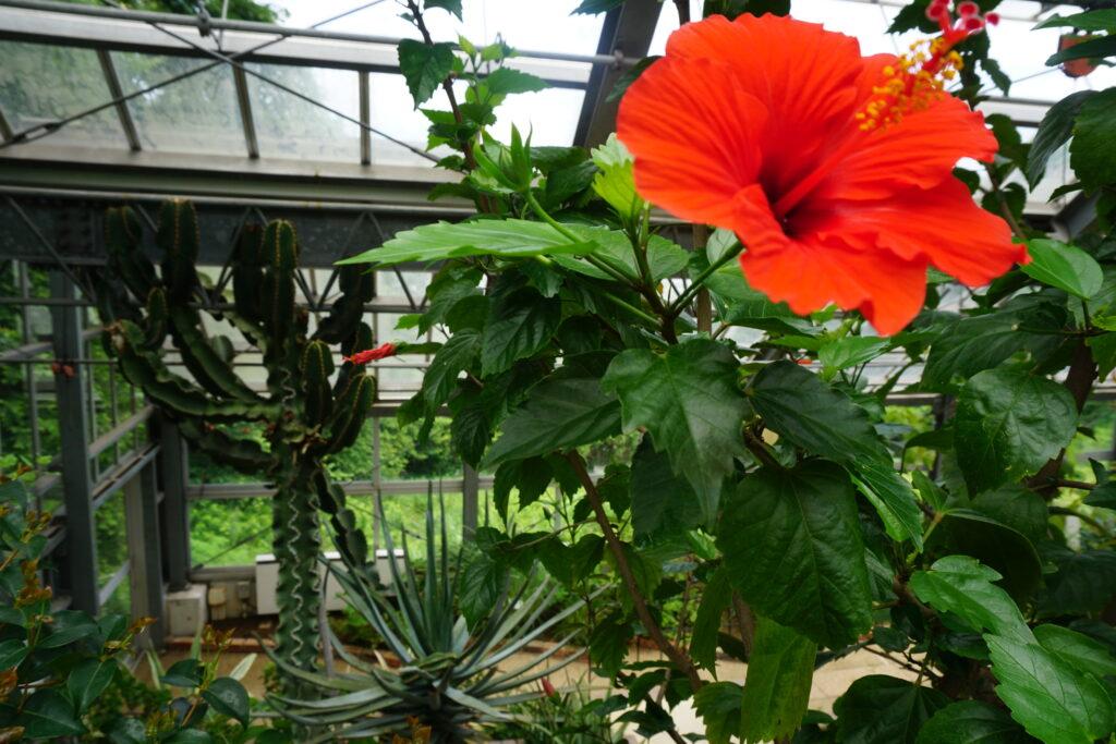 くりはま花の国 Kidsガーデン グリーンハウス(温室)